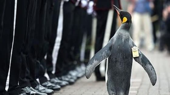 All hail the coolest of penguins - a knighted one.