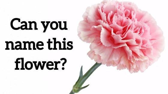 Be honest, be nice, be a flower.  SHARE this quiz with the world if you pass.