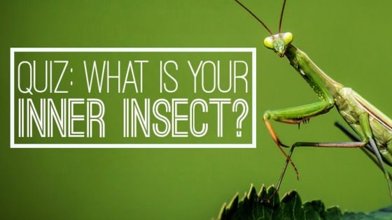 With it being National Insect Week it seemed only right to celebrate the world's incredible range of creepy crawlies. Take our quiz to find out what your 'inner' insect is: