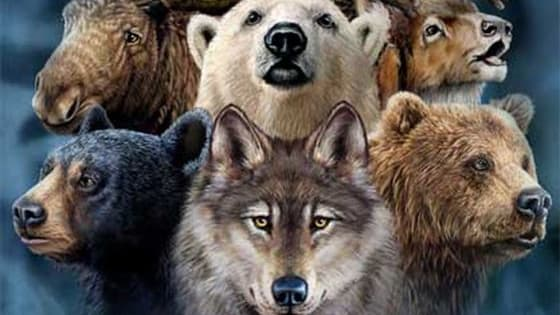 Find out what your Spirit Animal is!