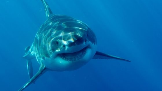 Discovery Shark Week is around the corner - check your facts!