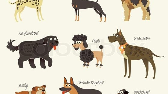 Have you ever wondered what dog breed you are most like?