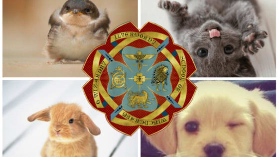 You've always known your Hogwarts House, but how well do you really know where you'd belong at Ilvermorny? These cute little creatures will tell you!