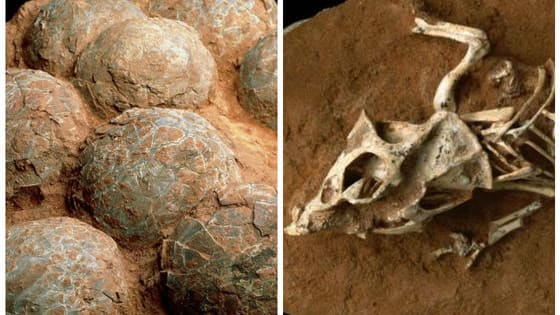 A new study has shown that dinosaur eggs may have taken up to six months to hatch, and that long hatch time may have made them less viable as a species... What do you think?