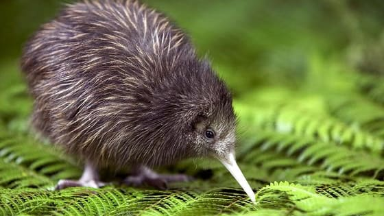 Find out how Kiwi you are with this quiz.