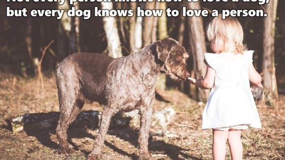 Out of these 23 personality traits all dog lovers have in common - Which do you posses?