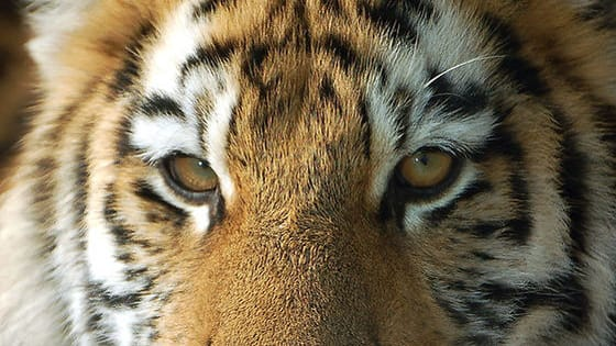 Look into their eyes. Can you tell which animal each eye belongs to?