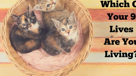 Find the purrfect answer today!