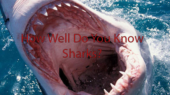 test your knowledge on the king of the ocean.