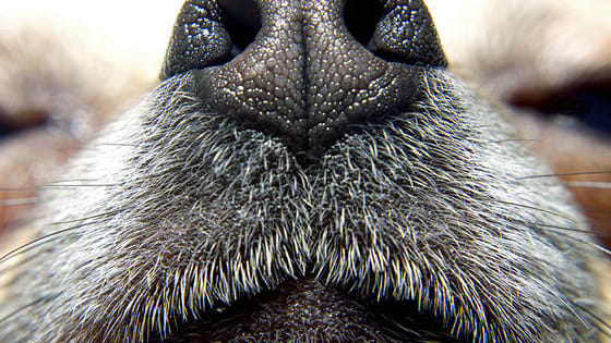 Can you smell out these 18 dog breeds by their nose alone?