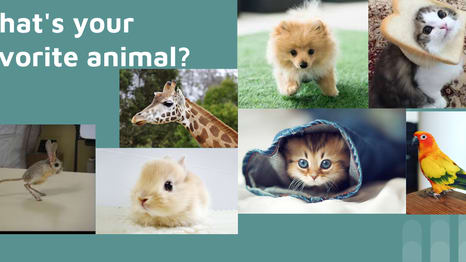click start to see what animal you like the most and the one you would want to keep!!!!!