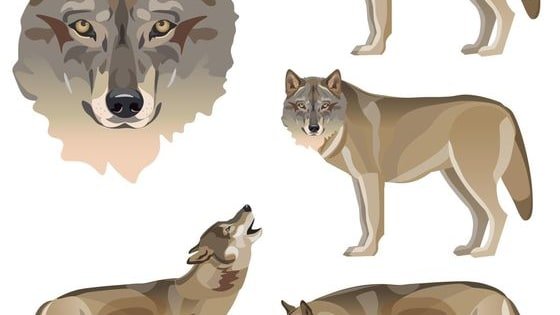 Ever wondered what type of wolf you'd be? Well, now you can find out!