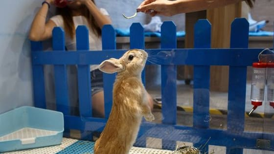 It's time to go to Hong Kong, everyone. They have literally all the bunnies!