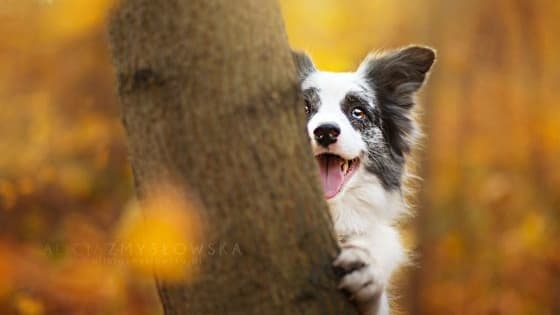 Dogs have the willful spirit of being intelligent and loyal companions. Have you ever wondered which breed you would be?