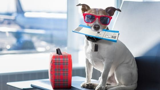 This quiz will tell you what kind of pet you should get. Comment below if you are happy with your result.