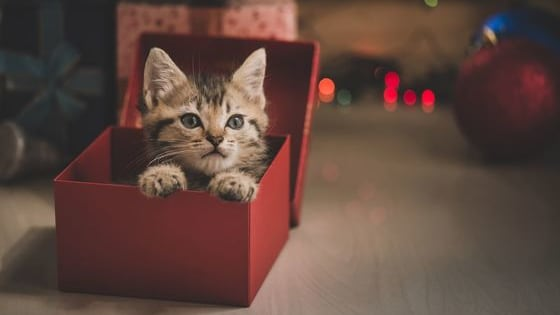 We have all been in that position where we do not what to buy your cat lover friend. Here is a countdown for the best cat gifts.