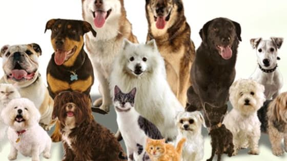 Ask yourself, are you a dog breed expert? Find out now!