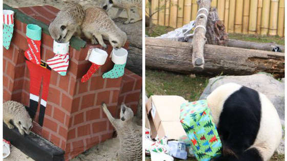 It's the holiday season for animals, too! These furry friends are having a great Christmas at the zoo!