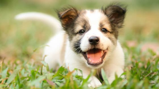 Find out with dog breed matches your positive personality!