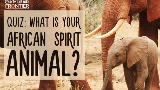Homo sapiens originated in Africa, take our quiz to see which African species is your spirit animal!