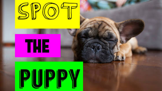 See if you can spot the right puppy of the same breed, just by using a photo of the adult!