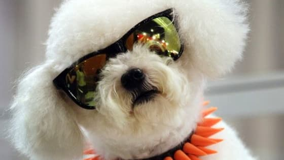 Doggles, day glo and dog breading. Which of these trends are on fleek and which are totally weak?