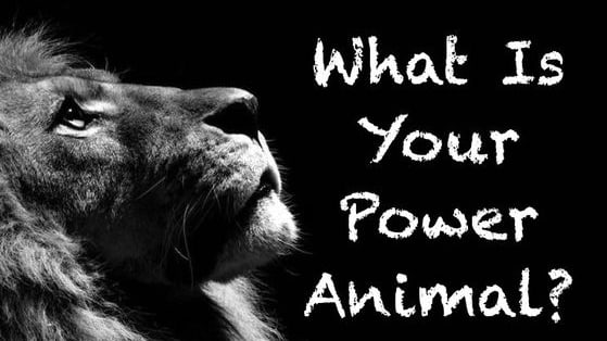 Many cultures believe that everyone has their own power animal that can help us protect, inspire and create! Take this quiz to find out your power animal!