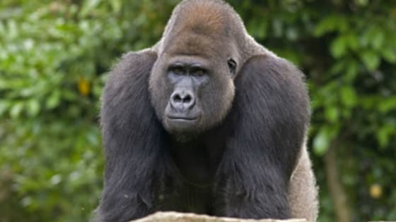 Do U think the #HarambeMom deserves to be vilified?