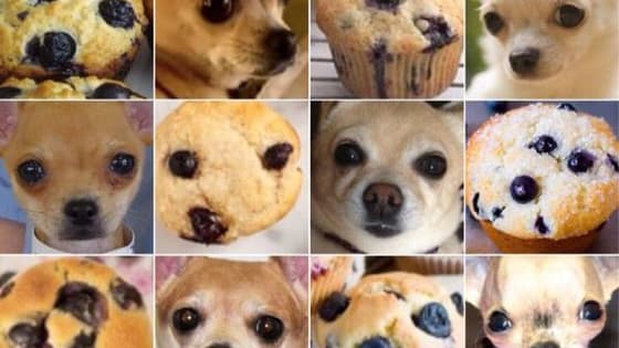 Can you tell the difference between stock images of chicken wings and adorable fluffy labradoodles? What about Dalmatians and scoops of ice cream? Check out all the food that looks like animals below and vote up  your favorites.