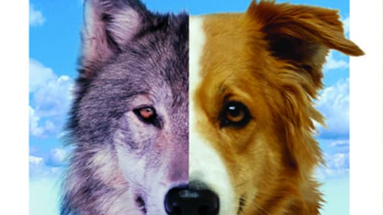 Are you more alike the wild wolves or the tame dogs? Or are alike the wolf-dog mix?