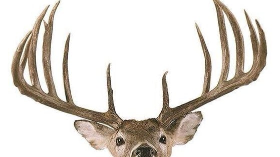 Did you ace our last deer quiz? Here's an ever harder one for you to chew on.