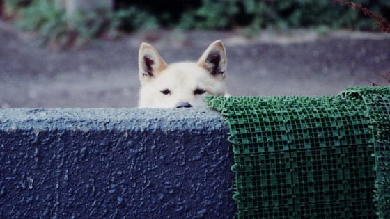 12 clear examples of dogs utterly failing at the game of hide and seek.