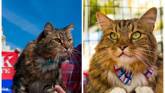 In 2012, Hank the Cat ran for senator in the state of Virginia against Tim Kaine, Hillary Clinton's running mate. On the campaign trail, Hank raised thousands of dollars for animal shelters and got over 6000 votes! Would you elect Hank for the presidency?