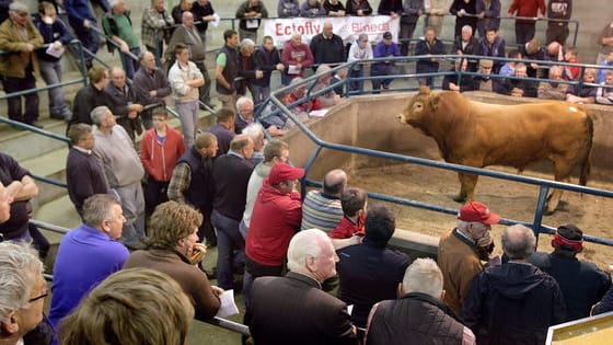Guess how much these cattle sold for at Loughrea Mart in Co Galway, earlier this week.