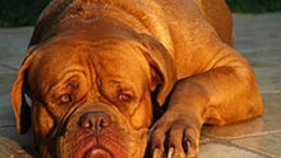 Do you love Dogs? How many breeds do you know? Take this quiz and see if you can identify the 10 dog breeds