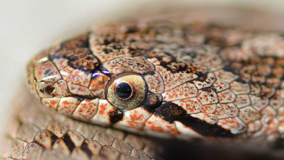 Already wanted to know which french snake you could be? This test will help you to find out !