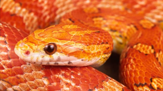 There are many snakes in the world, but they all have different personalities. Which snake are you?