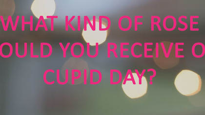 Select your favorite Lauren Oliver book to find out what color rose you'd receive this Cupid Day. Fingers crossed they are all from Kent McFuller!