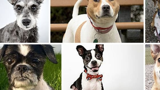 Adopt-a-pet uses colorful categories to describe its adoptable pets. Can you match each pet with its descriptor? It's harder than it looks!