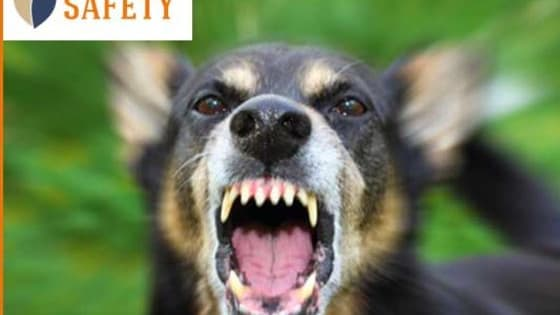 Each year, over 4.5 million Americans and their pets are victims of dog bites.  Answer these 6 questions to receive your Dog Attack Danger Score?