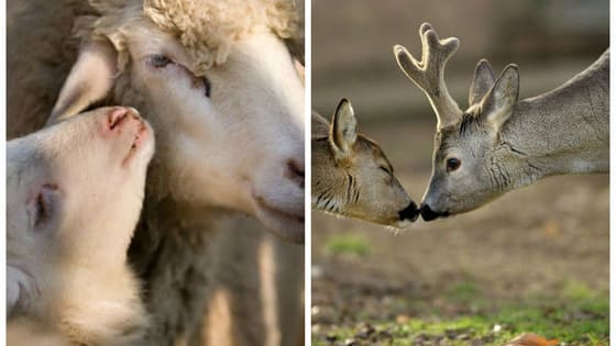 Macedonian photographer Goran Anastasovski has been photographing animals for over ten years, and now he's produced this photo series showing that animals are sometimes more capable of love and generosity than humans are.