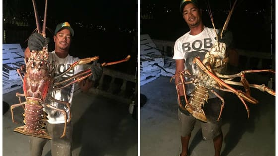 A fishing trip accidentally found one of the biggest lobsters ever caught and you need to see how enormous it is for yourself!