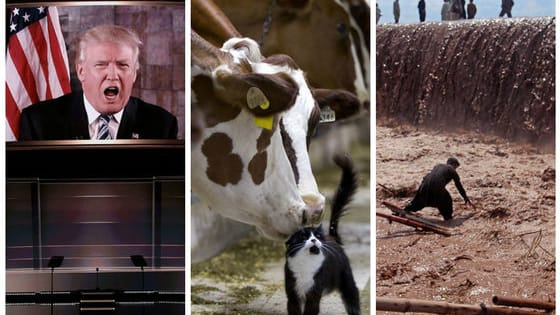 It was a hard year for many, and these beautiful pictures reflect that-Content Warning; some of these are upsetting...