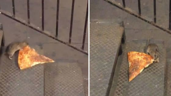 From pizza rat to Caitlyn Jenner, it all went viral!
