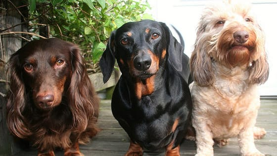 Dogs are basically people anyway, find out what kind of dog you would be! Take the quiz now!