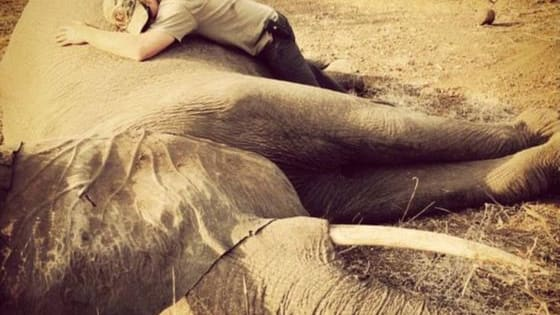 The Prince traveled to Malawi to relocate the Elephants away from poachers