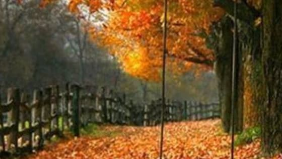 Fall's here! Discover what fun activity you should enjoy!