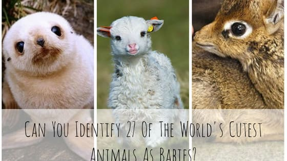If you think these adult animals are cute, just wait until you see them as kids, but can you tell what they'll grow up to be?