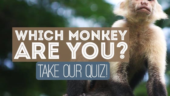 Celebrate #MonkeyDay by seeing which one of our cousins most matches your personality