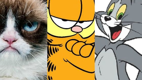 Answer these questions and discover in less than nine lives which famous cat you are.